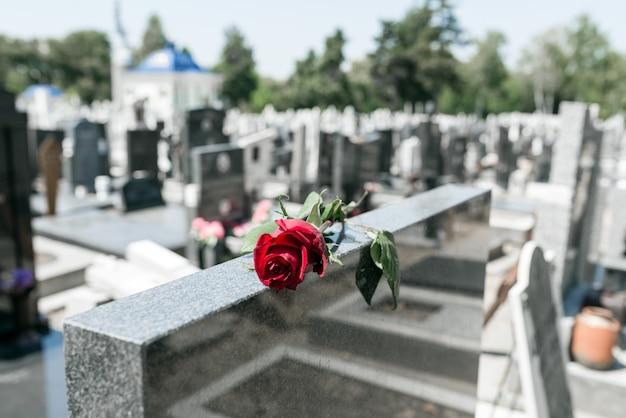 Rote rosenblume auf einem grab auf einem friedhof