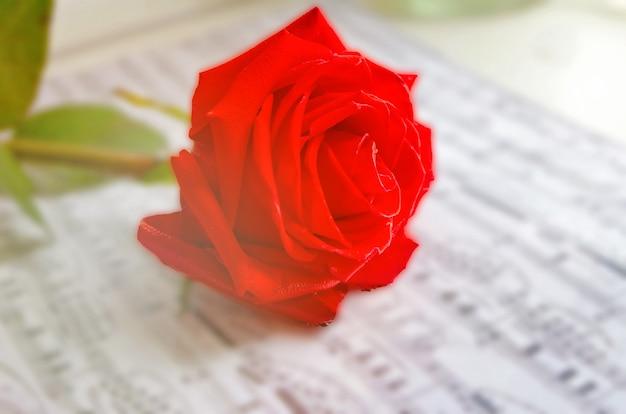 Rote rosenblume und notenblatt.