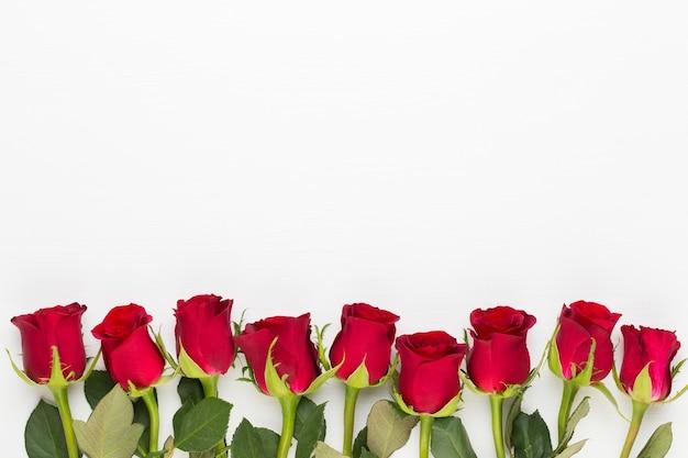 Rote rosenblumen auf weißem hintergrund. flache lage, draufsicht.