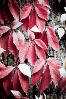 Rote schlingpflanzenblätter, die auf baumrinde-nahfiltern nachhängen