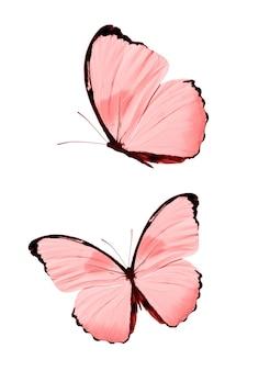 Rote schmetterlinge isoliert auf weißem hintergrund. tropische motten. insekten für das design. aquarellfarben