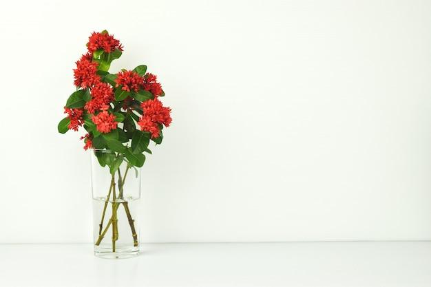 Rote spitzenblume im vase auf weiß.