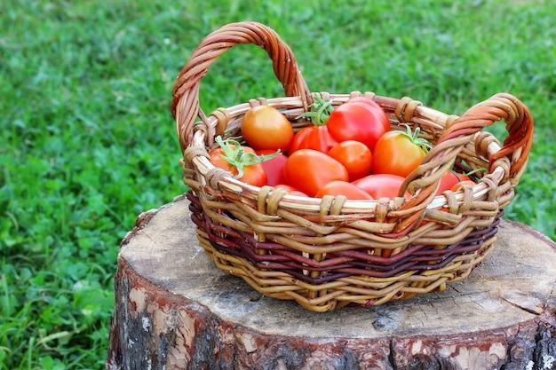 Rote tomaten in einem korb auf einem stumpf auf einem unscharfen grashintergrund.