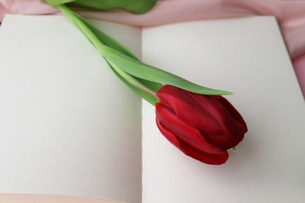 Rote tulpe auf weißem hintergrund