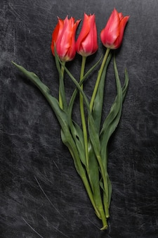 Rote tulpen auf einer kreidetafel. tag des lehrers oder tag des wissens, muttertag. ansicht von oben. zurück zur schule