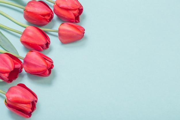 Rote tulpen auf grünem papierhintergrund