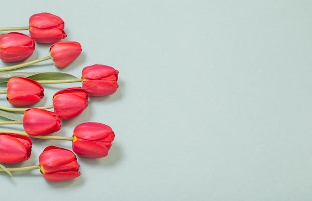 Rote tulpen auf grüner papieroberfläche