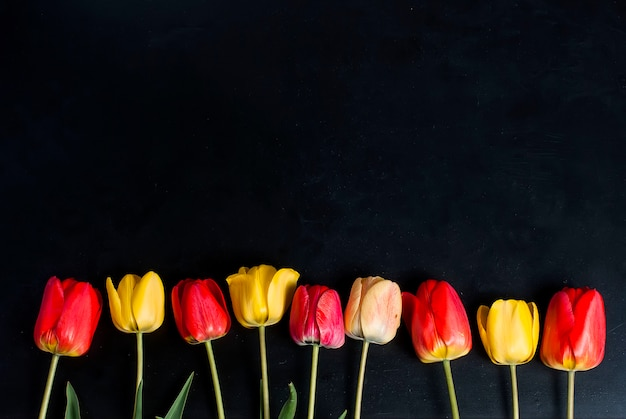 Rote tulpen in der reihe auf dem schwarzen hintergrund