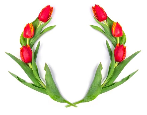 Rote tulpen isoliert auf weißem hintergrund