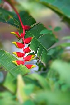Rote und gelbe orchidee im naturwald