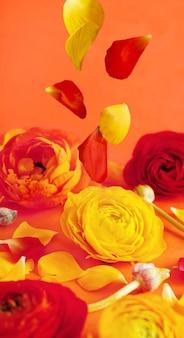 Rote und gelbe ranunkelblumen und blütenblätter auf einem korallenroten hintergrund schließen oben