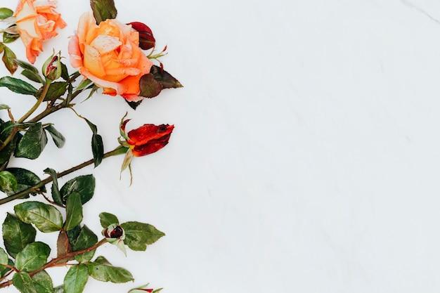 Rote und orangefarbene rosen auf weißem marmorhintergrund