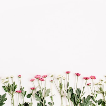 Rote und weiße wildblumen auf weißer oberfläche