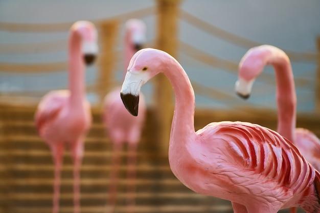 Rote vorbildliche flamingos und sonnenuntergang