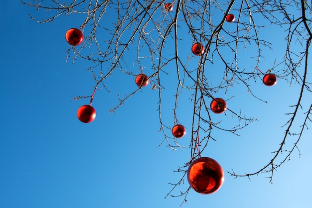 Rote weihnachtskugeln auf einem baum im freien