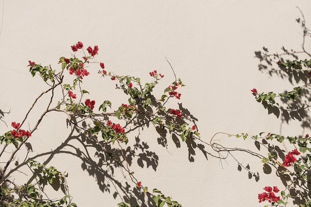 Roter blumenzweig, blätter auf neutraler beige betonwand Premium Fotos