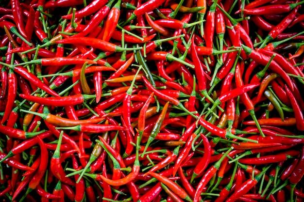 Roter chili-hintergrund. hintergrund chili rot