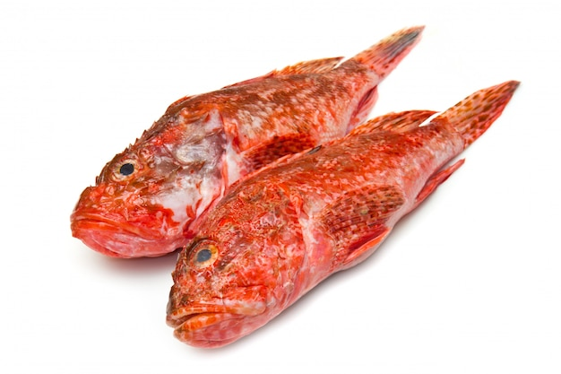 Roter fisch