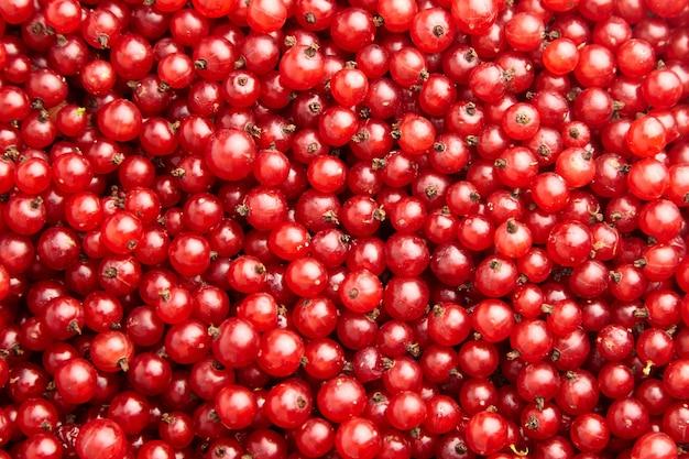 Roter johannisbeerbeeren-nahrungsmittelhintergrund