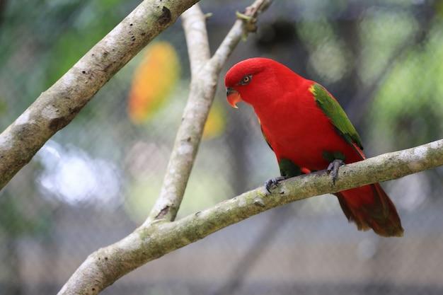 Roter macore vogel auf niederlassungen von tropischen bäumen im dschungel.