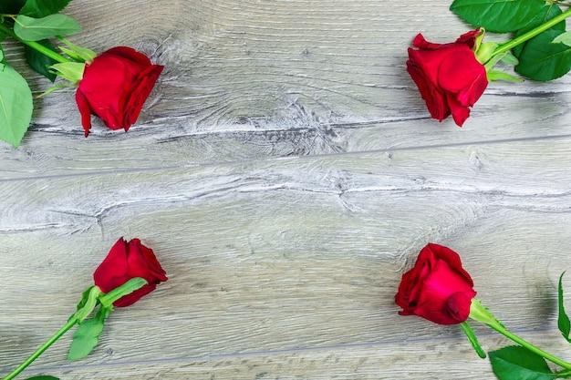 Roter rosenbusch