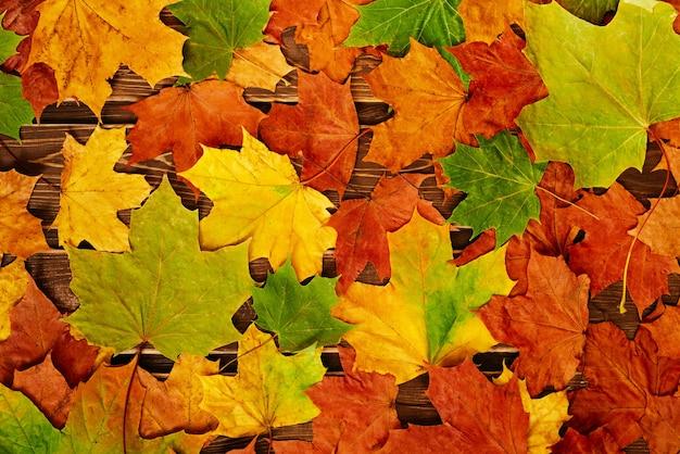 Roter und orangefarbener hintergrund von herbstahornblättern und -eicheln. ansicht von oben. ein platz für ihren text.