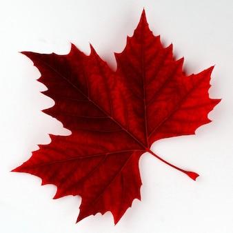 Rotes ahornblatt auf einer weißen oberfläche