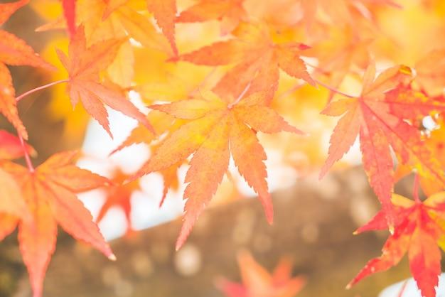Rotes ahornblatt