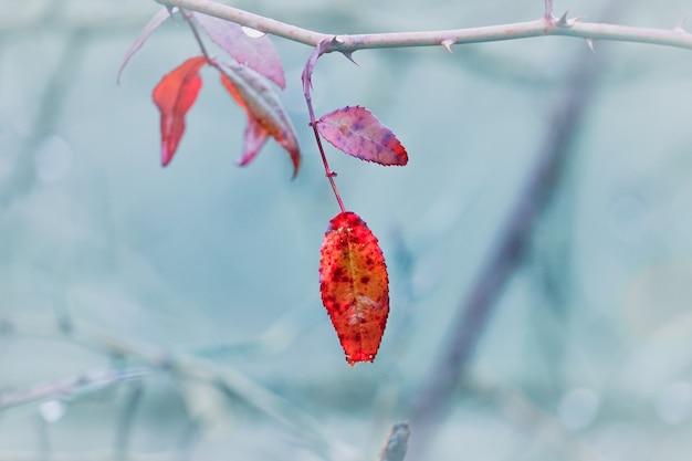 Rotes baumblatt in der natur in der wintersaison