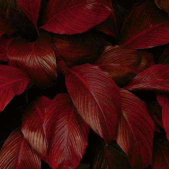 Rotes blatt hintergrund natur hintergrund konzept
