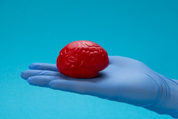 Rotes gehirn auf der handfläche im blauen latexhandschuh des doktors