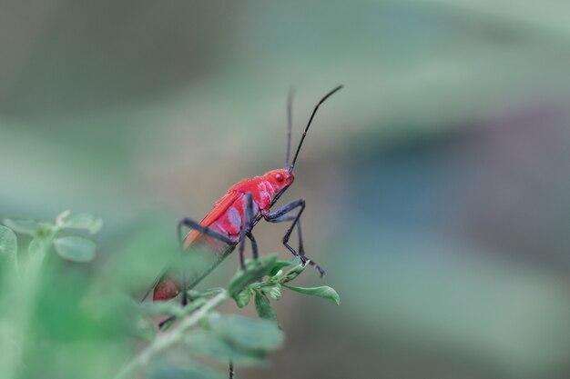 Rotes insekt auf einer niederlassung