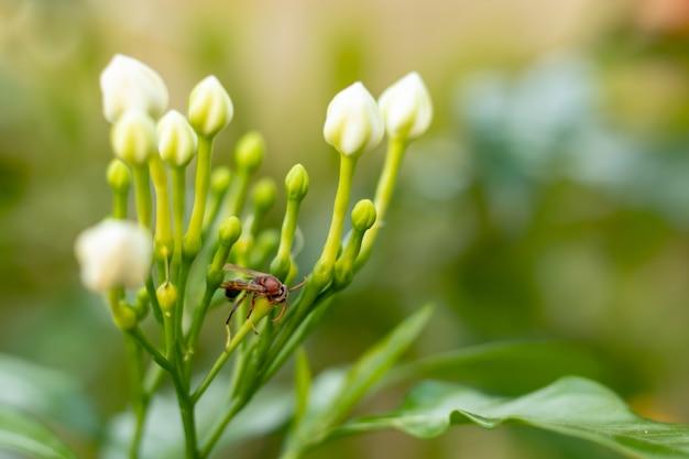 Rotes insekt auf einer weißen blume im garten.