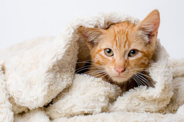 Rotes kätzchen in eine decke gewickelt