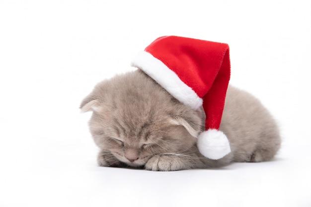 Rotes kätzchen in einer weihnachtsmütze liegt auf einer weißen wand. neujahr. weihnachten