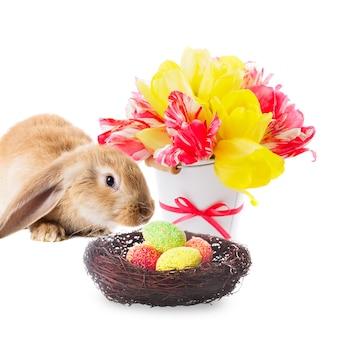 Rotes kaninchen mit nest von eiern und tulpen auf weiß. osterdekorationen