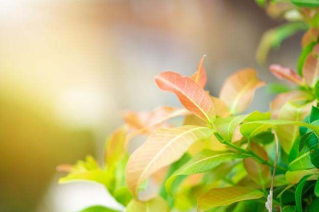 Rotes, orange und grünes blatt der nahaufnahme im garten auf unscharfem hintergrund.