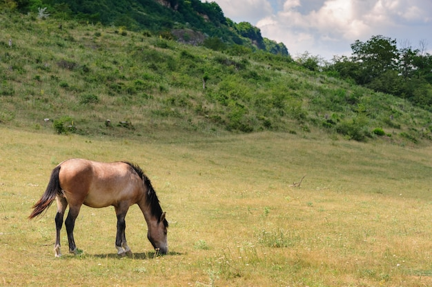 Rotes pferd, das an der wiese weiden lässt