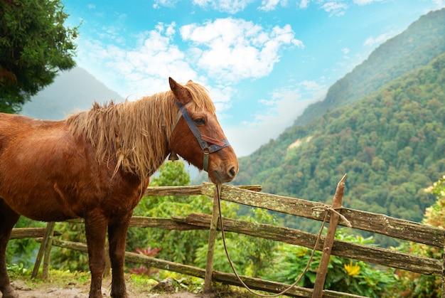 Rotes pferd in der farm, die durch wald umgibt