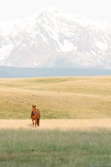 Rotes pferd vor dem hintergrund der berge. wilder mustang