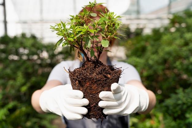 Rothaarige frau kümmert sich in einem gewächshaus um ihre pflanzen