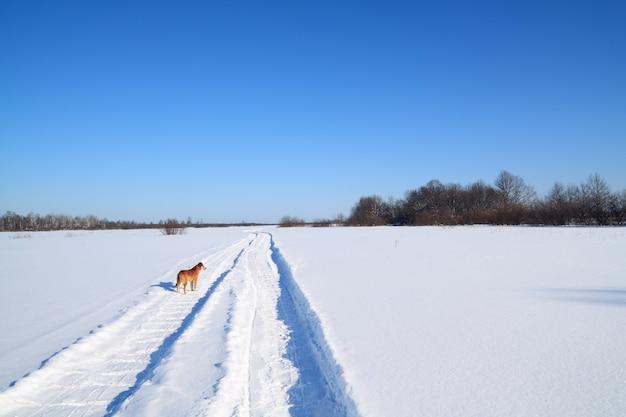 Rothaarige hund auf der landstraße