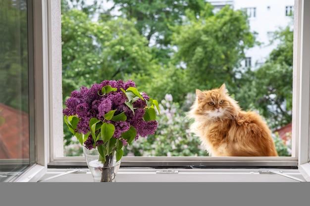 Rothaarige katze sitzt am offenen fenster und genießt den moment