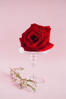 Rotrose auf einem glaskuchenstand auf rosa, tendenzzusammensetzung