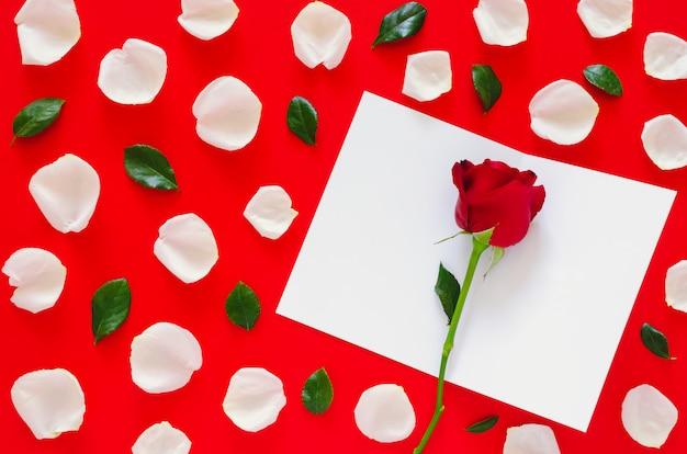 Rotrose mit den weißen blumenblättern und den blättern setzte an rote oberfläche mit leerer weißer karte für san valentinstag