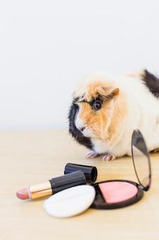 Rouge; lippenstift und schwamm vor guinea auf hölzernem hintergrund