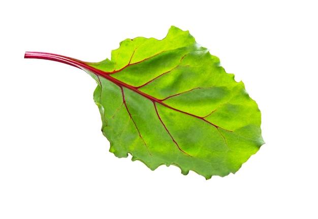 Rübenblätter. rote-bete-blätter, frisches rote-bete-blatt isoliert auf weißem hintergrund