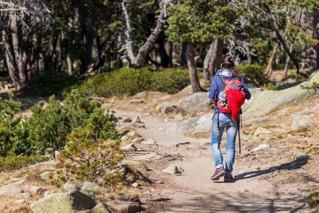 Rückansicht einer backpackerfrau, die entlang der spur in wald geht