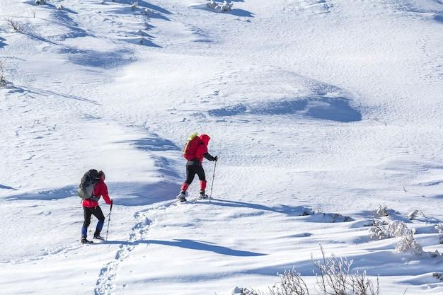 Rückansicht von zwei touristischen wanderern mit rucksäcken und wanderstöcken, die an einem sonnigen wintertag auf weißem schneekopierraumhintergrund aufsteigenden schneebedeckten berghang aufsteigen. extremsport, erholung, winterurlaub.