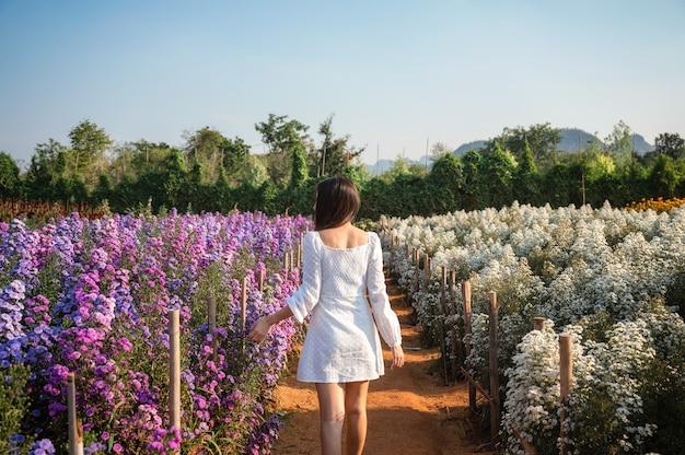 Rückseite der jungen asiatischen frau, die in der furche von margaret und schneiderblume geht, die mit sonnenlicht im garten blüht